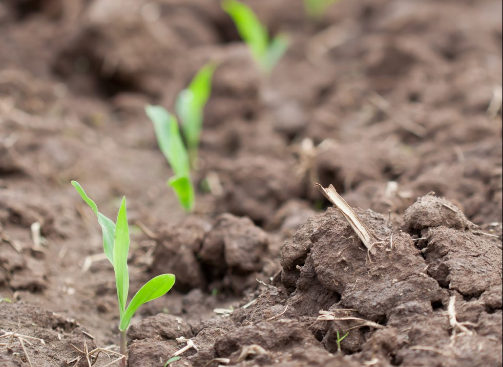 Nebraska Corn Planting Progress
