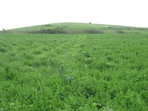 Ag Landowner's Guide to CRP
