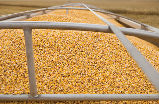 UFARM can help landowners with grain marketing
