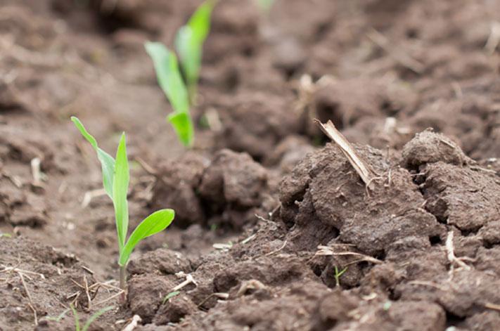 Planting Progress Nebraska
