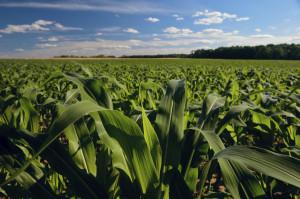 2014 Farm Bill
