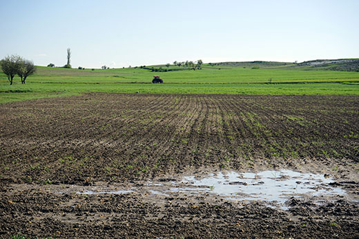 Cornfield-with-puddle