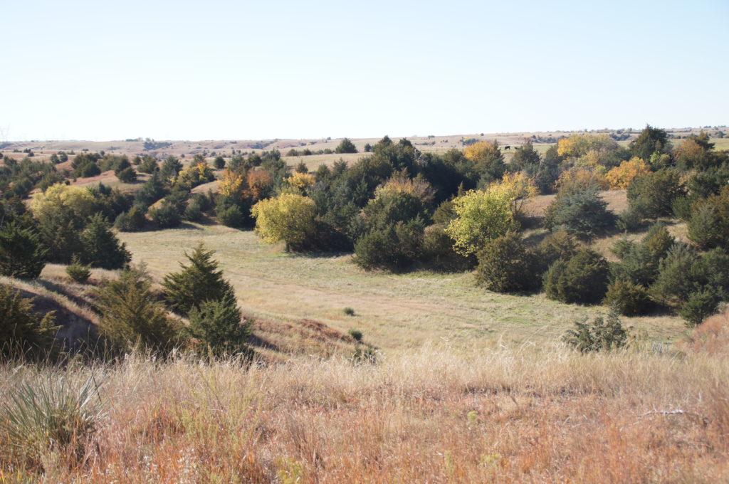 Nebraska Pasture