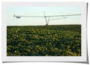 Agricultural Consultations - Nebraska Landowner