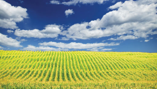 Key Qualities Land Manager Should Have
